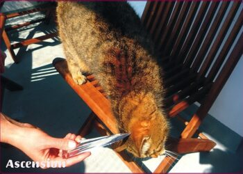 Ascension-Tiere-Katzen-Flamme-rahmen-IV-1