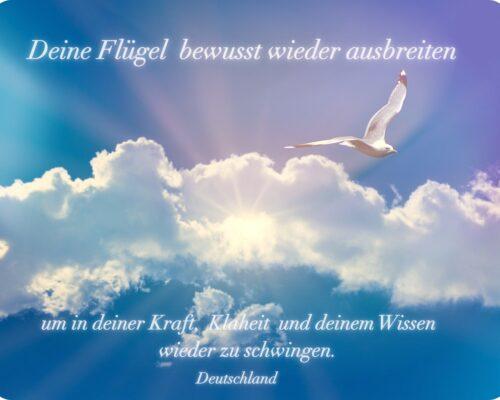 seagull-5339266_1920-Deutschland-1