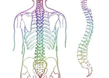 spine-257870