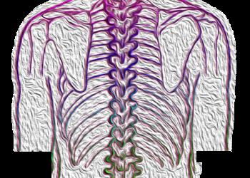 spine-4052599-350x250