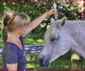 ASCension - Tiere -Pferde -Dreifaltigkeitsflamme IIII
