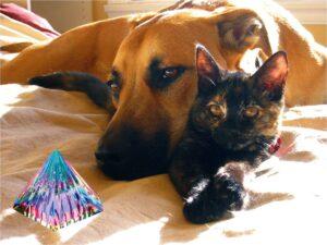 Pyramide - Hunde-Katzen