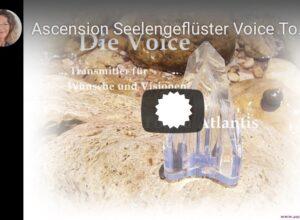 Video - Voice