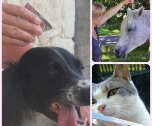 Tiere - Pferd-Hund-Katze