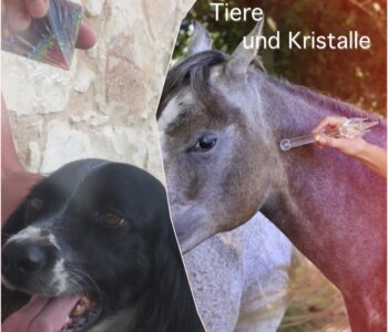 ascension-collage-tiere II