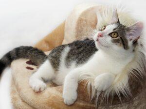 cat-4081971_1920